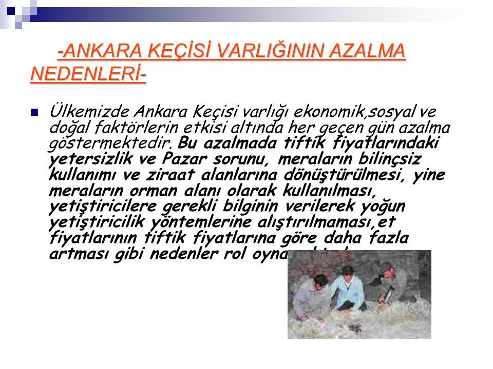 -ANKARA KEÇİSİ VARLIĞININ AZALMA NEDENLERİ-