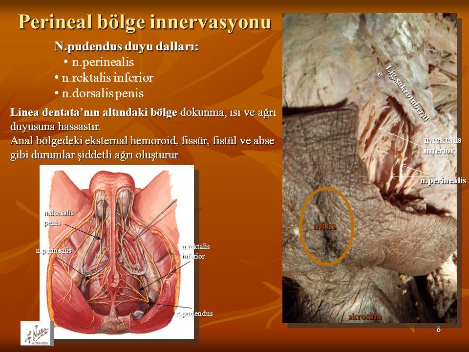 Perineal bölge innervasyonu