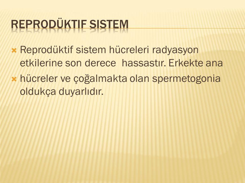 Reprodüktif Sistem Reprodüktif sistem hücreleri radyasyon etkilerine son derece hassastır. Erkekte ana.