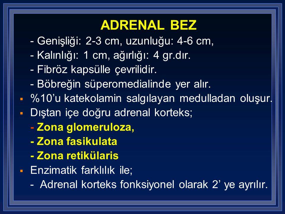 ADRENAL BEZ - Genişliği: 2-3 cm, uzunluğu: 4-6 cm,