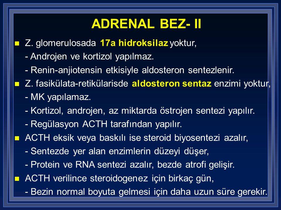 ADRENAL BEZ- II Z. glomerulosada 17a hidroksilaz yoktur,