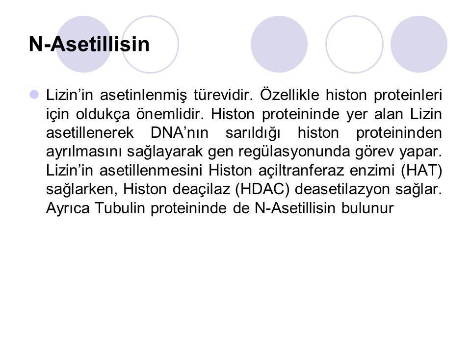 N-Asetillisin