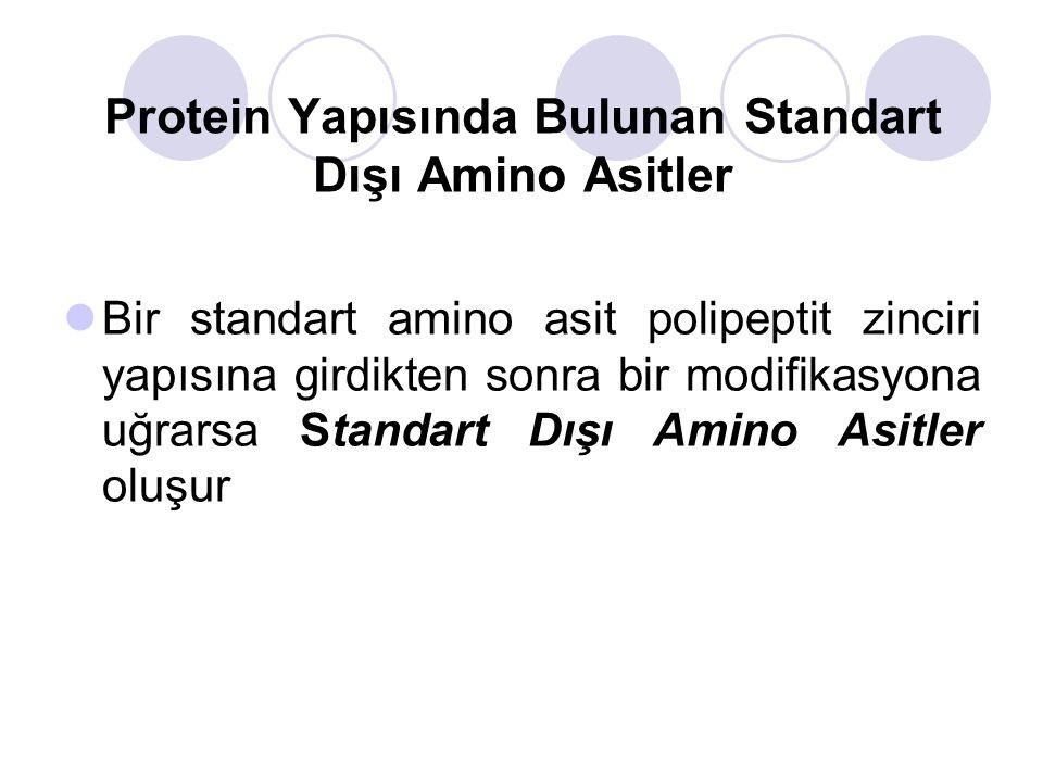 Protein Yapısında Bulunan Standart Dışı Amino Asitler