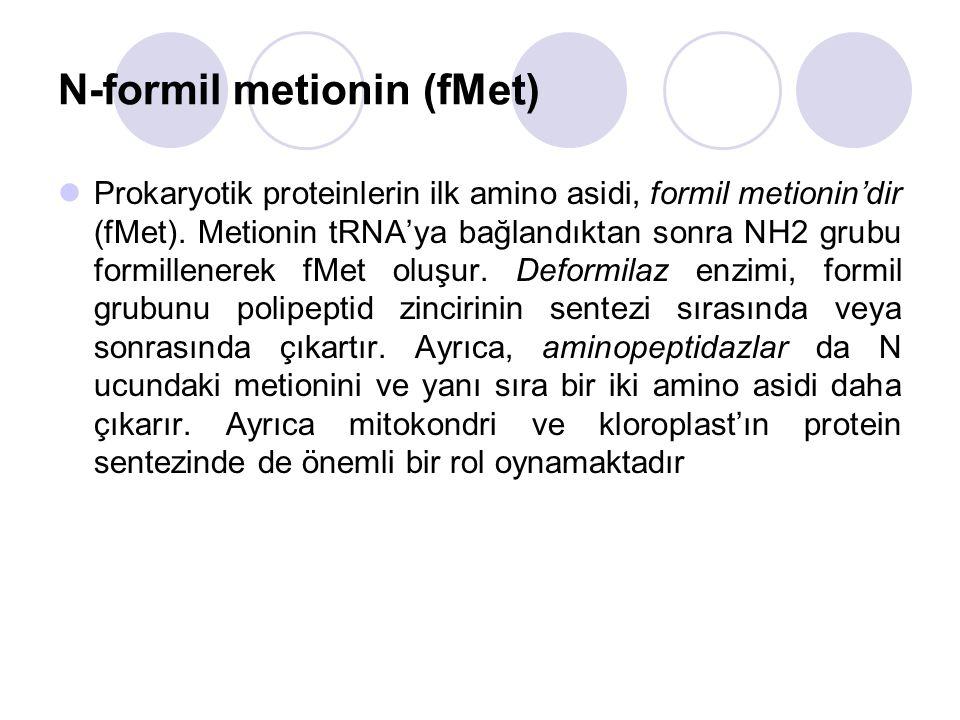 N-formil metionin (fMet)