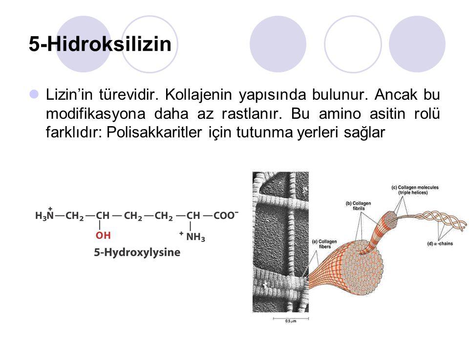 5-Hidroksilizin