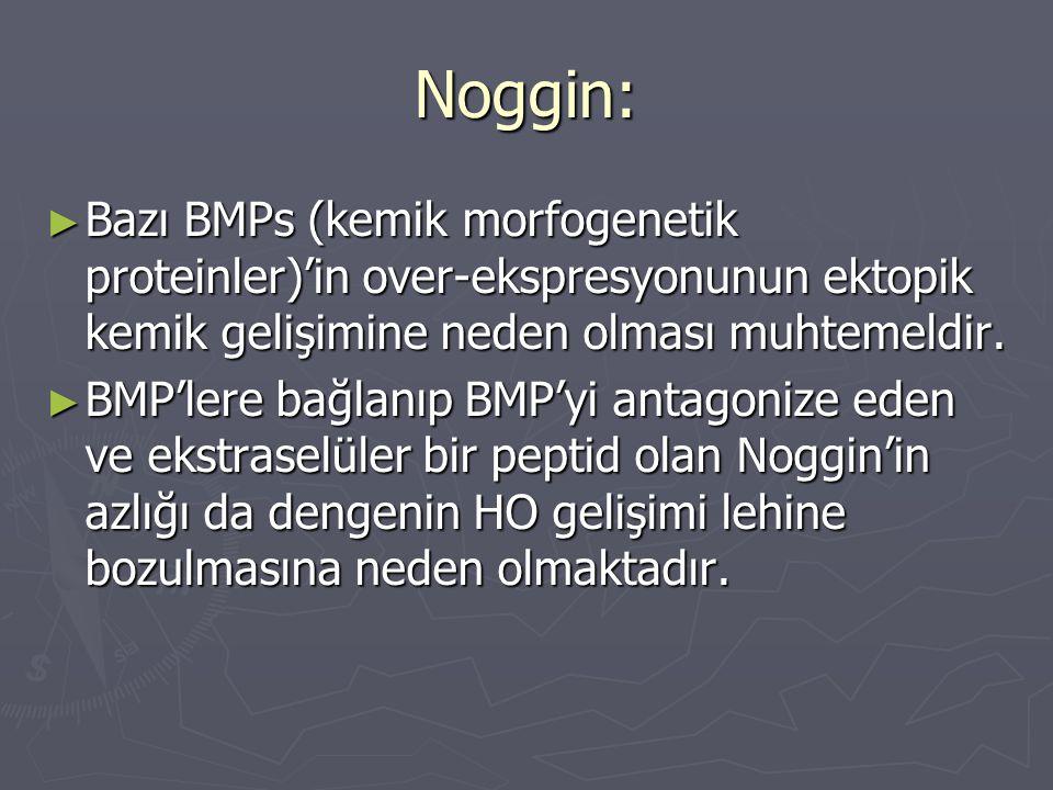 Noggin: Bazı BMPs (kemik morfogenetik proteinler)'in over-ekspresyonunun ektopik kemik gelişimine neden olması muhtemeldir.