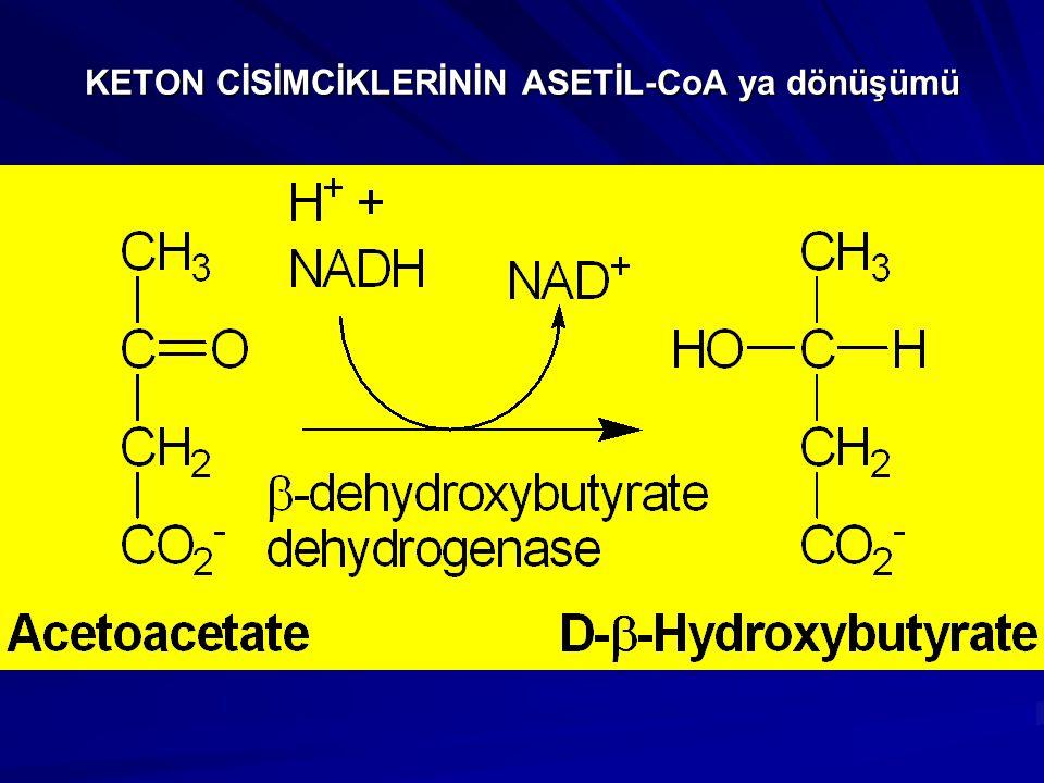 KETON CİSİMCİKLERİNİN ASETİL-CoA ya dönüşümü