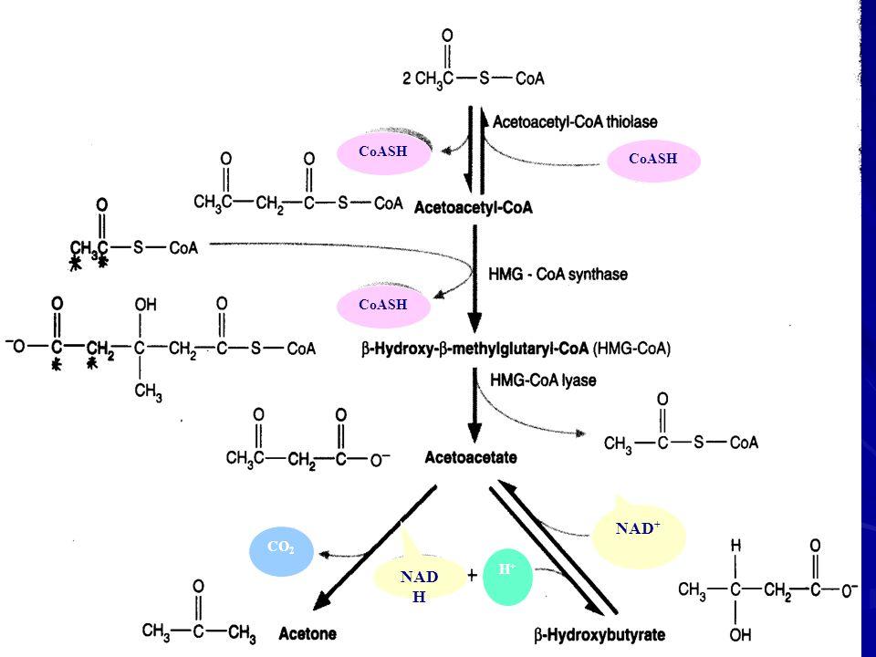 CoASH CoASH CoASH NAD+ CO2 H+ NADH