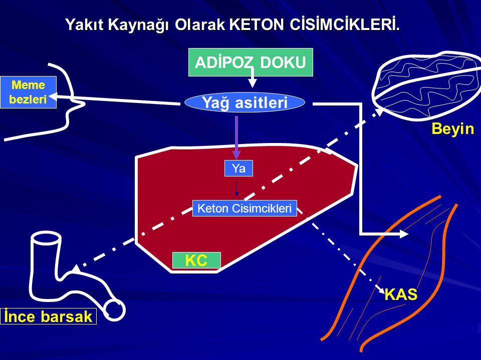 Yakıt Kaynağı Olarak KETON CİSİMCİKLERİ.