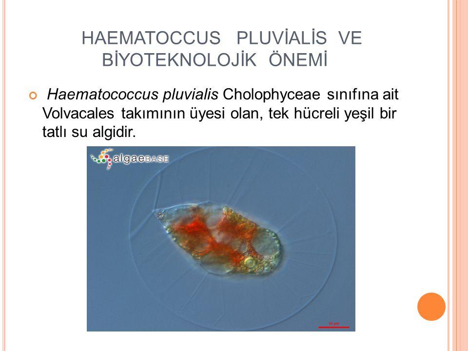 HAEMATOCCUS PLUVİALİS VE BİYOTEKNOLOJİK ÖNEMİ