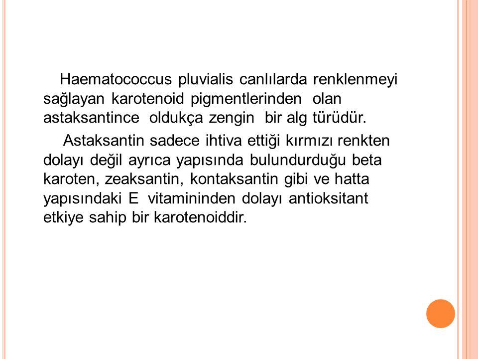 Haematococcus pluvialis canlılarda renklenmeyi sağlayan karotenoid pigmentlerinden olan astaksantince oldukça zengin bir alg türüdür.