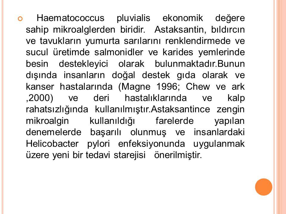 Haematococcus pluvialis ekonomik değere sahip mikroalglerden biridir