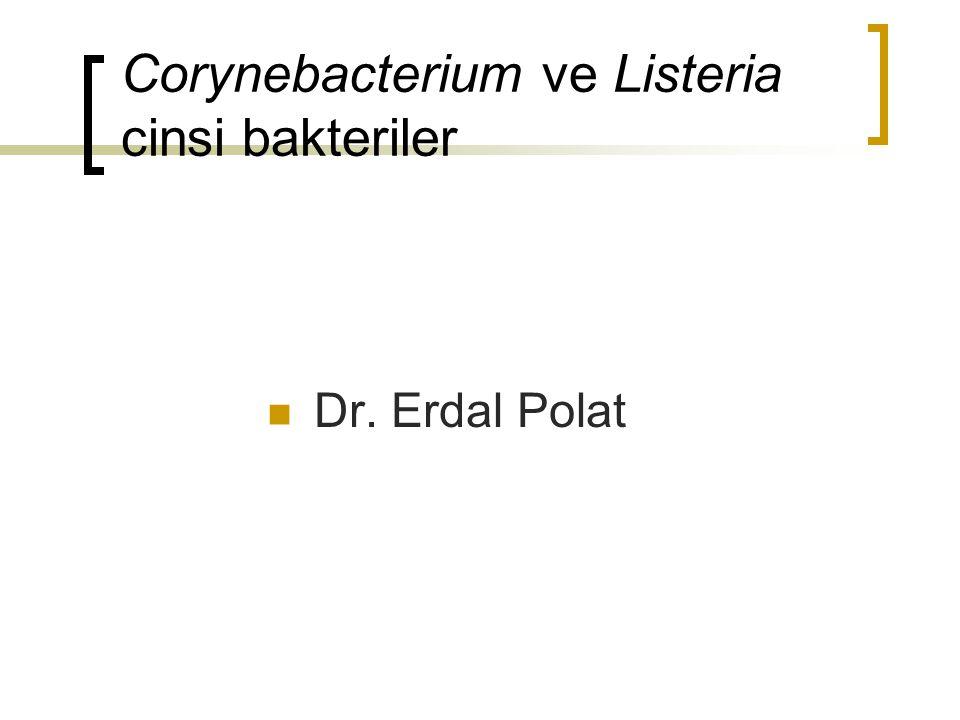 Corynebacterium ve Listeria cinsi bakteriler