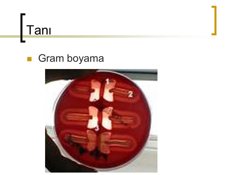 Tanı Gram boyama