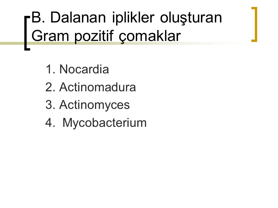 B. Dalanan iplikler oluşturan Gram pozitif çomaklar