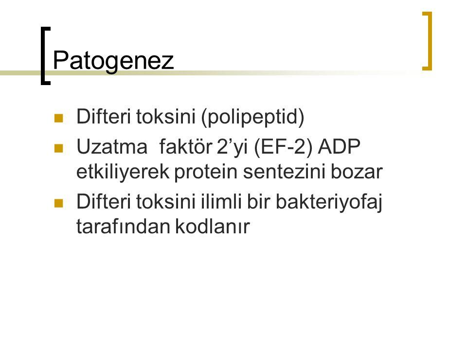 Patogenez Difteri toksini (polipeptid)