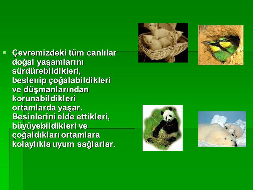 Çevremizdeki tüm canlılar doğal yaşamlarını sürdürebildikleri, beslenip çoğalabildikleri ve düşmanlarından korunabildikleri ortamlarda yaşar.
