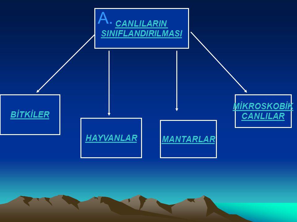 A. CANLILARIN CANLILARIN SINIFLANDIRILMASI SINIFLANDIRILMASI