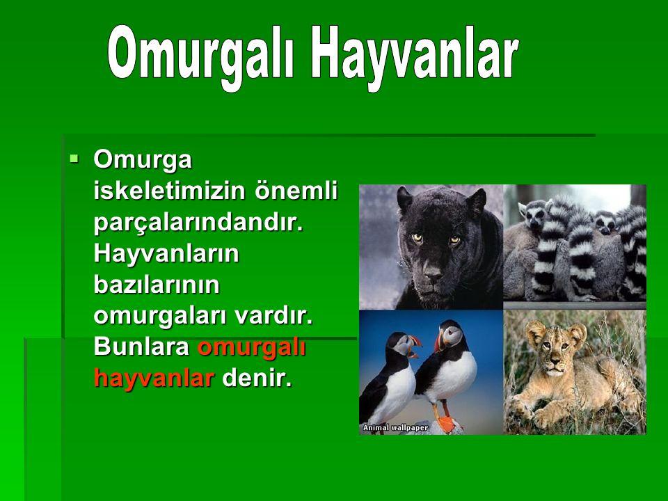 Omurgalı Hayvanlar Omurga iskeletimizin önemli parçalarındandır.