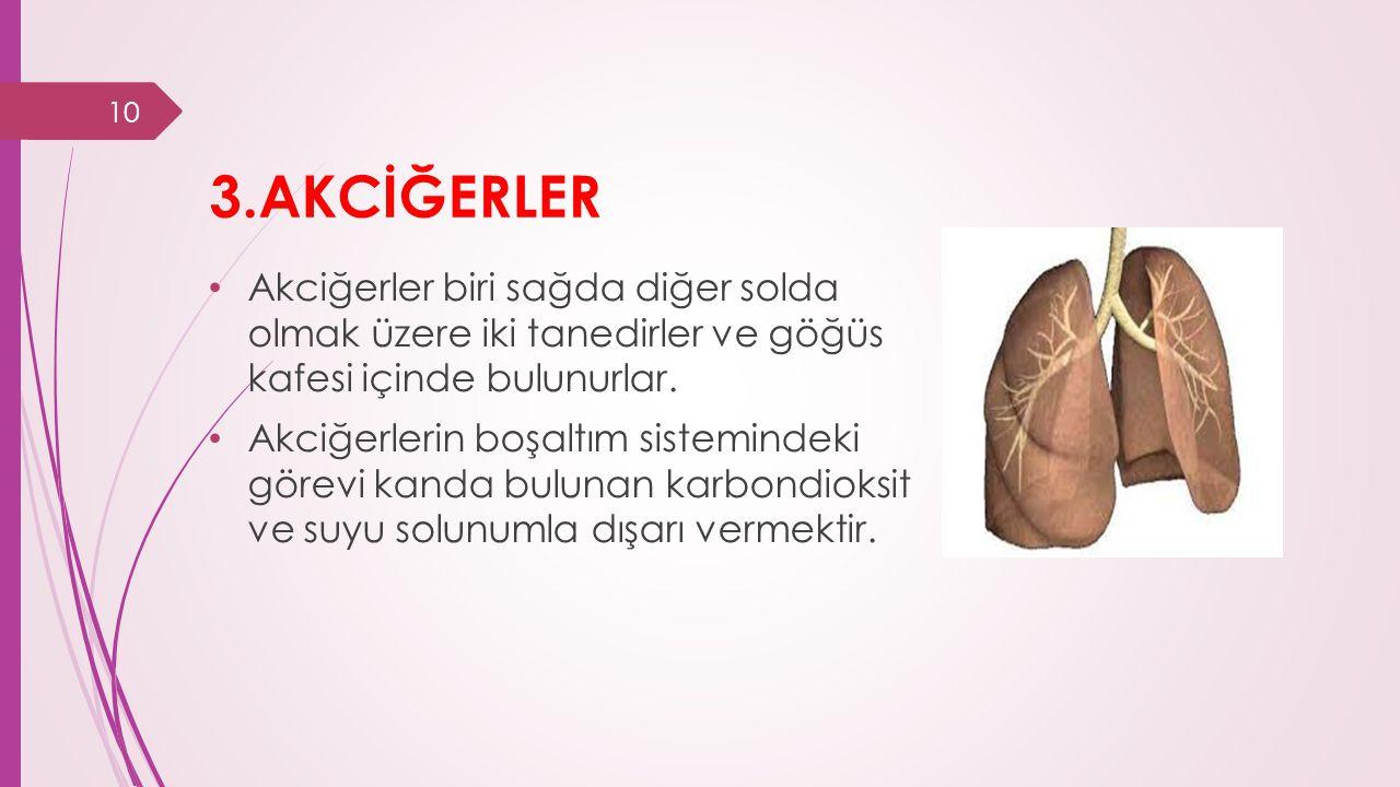 3.AKCİĞERLER Akciğerler biri sağda diğer solda olmak üzere iki tanedirler ve göğüs kafesi içinde bulunurlar.