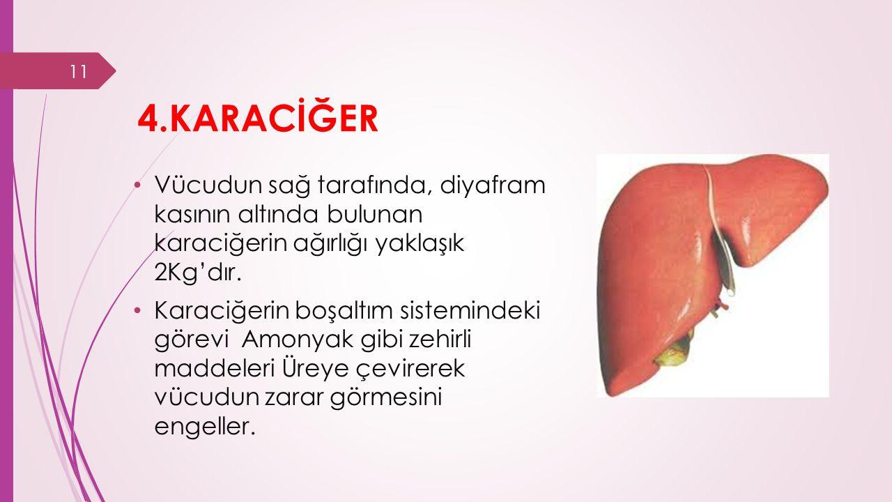 4.KARACİĞER Vücudun sağ tarafında, diyafram kasının altında bulunan karaciğerin ağırlığı yaklaşık 2Kg'dır.