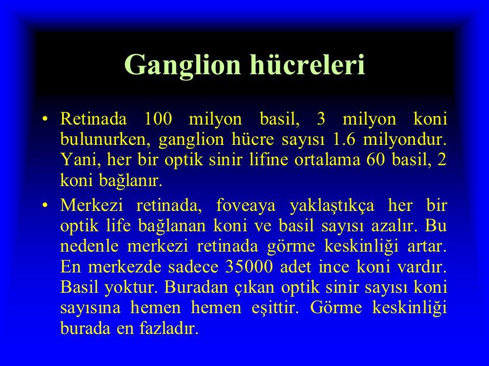 Ganglion hücreleri