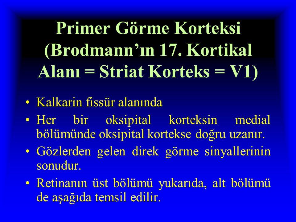 Primer Görme Korteksi (Brodmann'ın 17