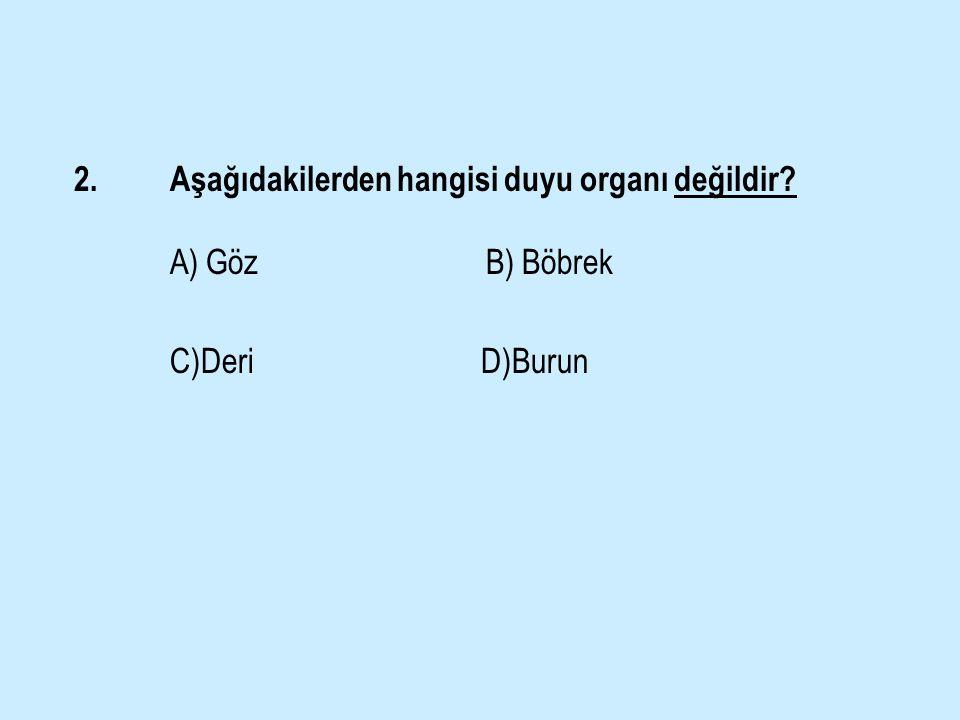 2. Aşağıdakilerden hangisi duyu organı değildir