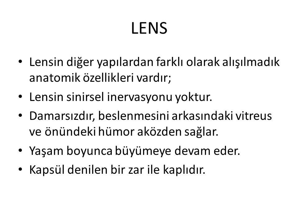 LENS Lensin diğer yapılardan farklı olarak alışılmadık anatomik özellikleri vardır; Lensin sinirsel inervasyonu yoktur.