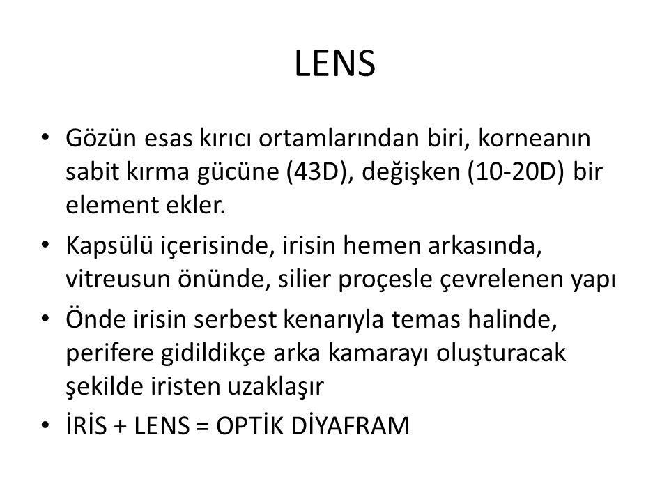 LENS Gözün esas kırıcı ortamlarından biri, korneanın sabit kırma gücüne (43D), değişken (10-20D) bir element ekler.