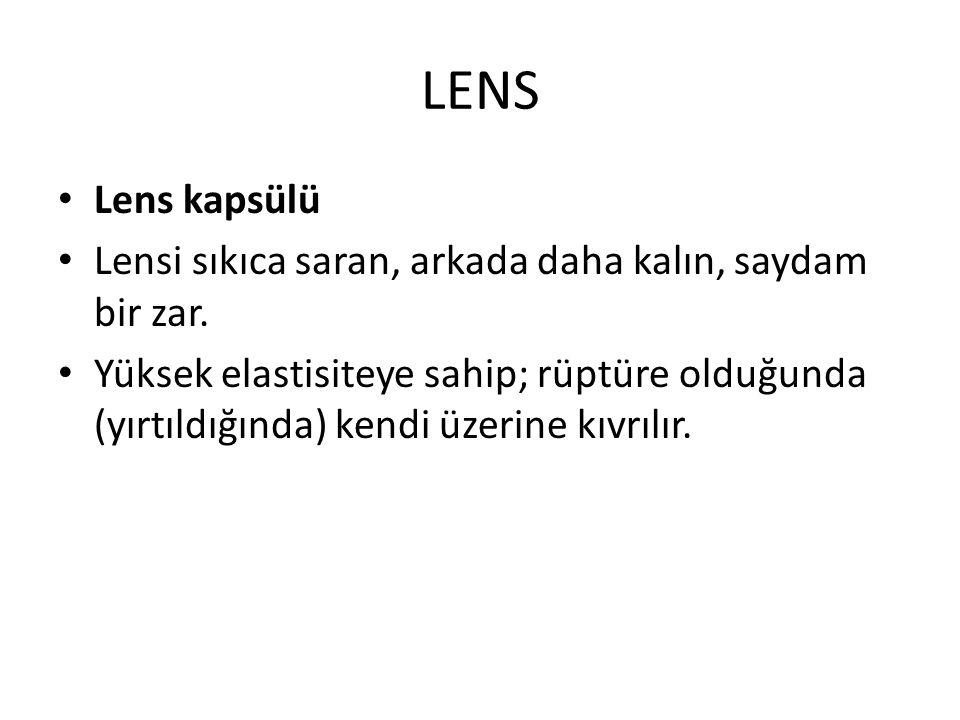 LENS Lens kapsülü. Lensi sıkıca saran, arkada daha kalın, saydam bir zar.