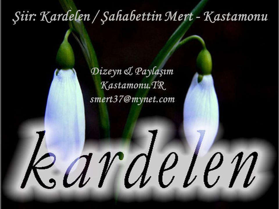 Şiir: Kardelen / Şahabettin Mert - Kastamonu