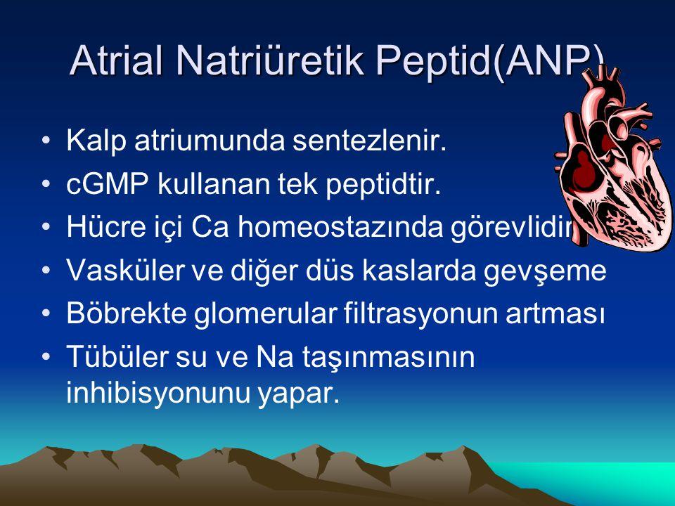 Atrial Natriüretik Peptid(ANP)