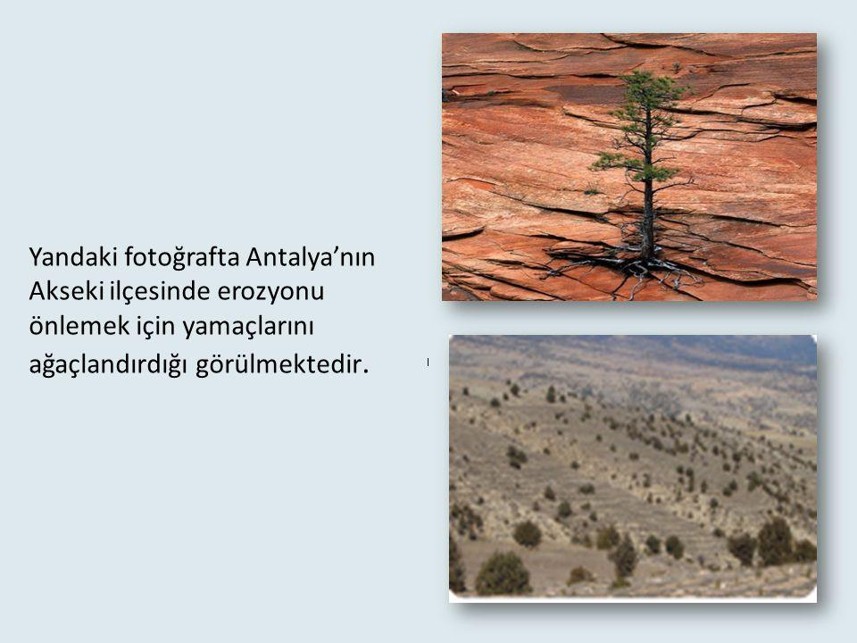 Yandaki fotoğrafta Antalya'nın Akseki ilçesinde erozyonu önlemek için yamaçlarını ağaçlandırdığı görülmektedir.