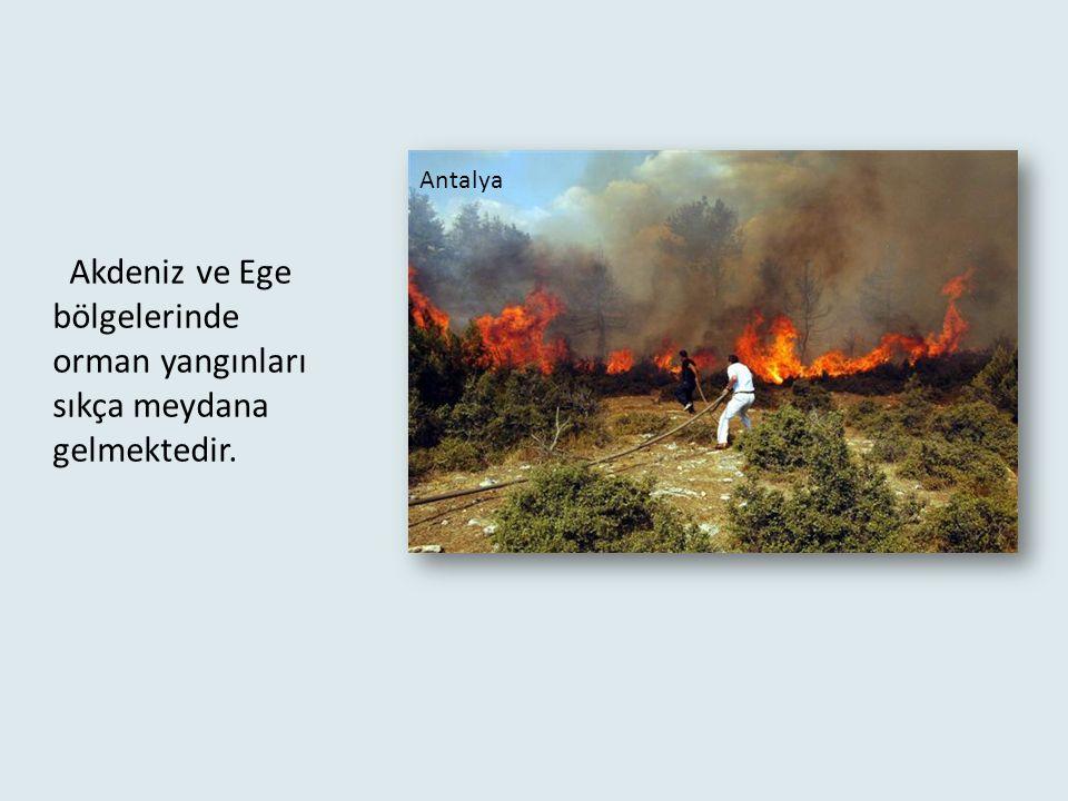 Antalya Akdeniz ve Ege bölgelerinde orman yangınları sıkça meydana gelmektedir.