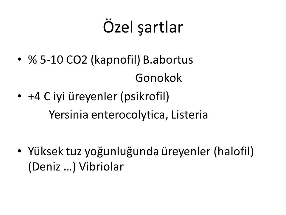 Özel şartlar % 5-10 CO2 (kapnofil) B.abortus Gonokok