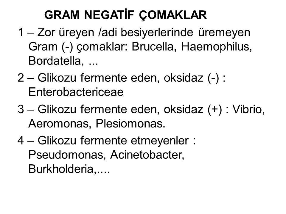 GRAM NEGATİF ÇOMAKLAR 1 – Zor üreyen /adi besiyerlerinde üremeyen Gram (-) çomaklar: Brucella, Haemophilus, Bordatella, ...