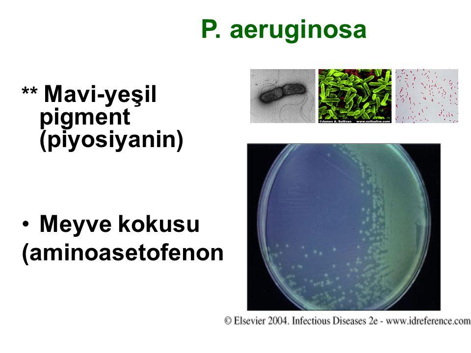 P. aeruginosa Meyve kokusu (aminoasetofenon)