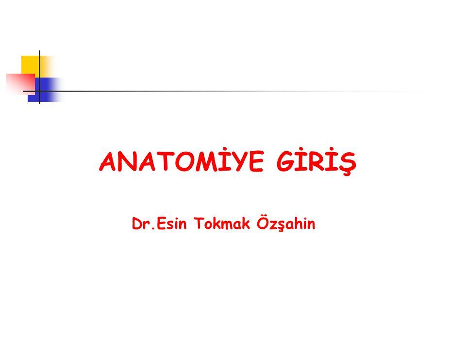 ANATOMİYE GİRİŞ Dr.Esin Tokmak Özşahin