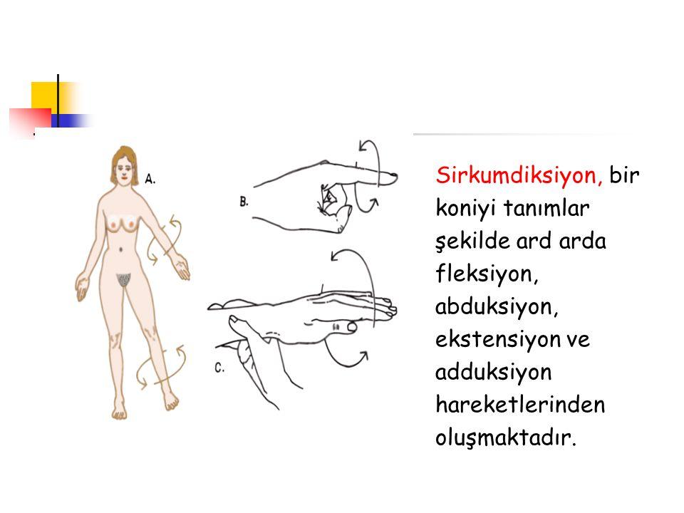 Sirkumdiksiyon, bir koniyi tanımlar şekilde ard arda fleksiyon, abduksiyon, ekstensiyon ve adduksiyon hareketlerinden oluşmaktadır.