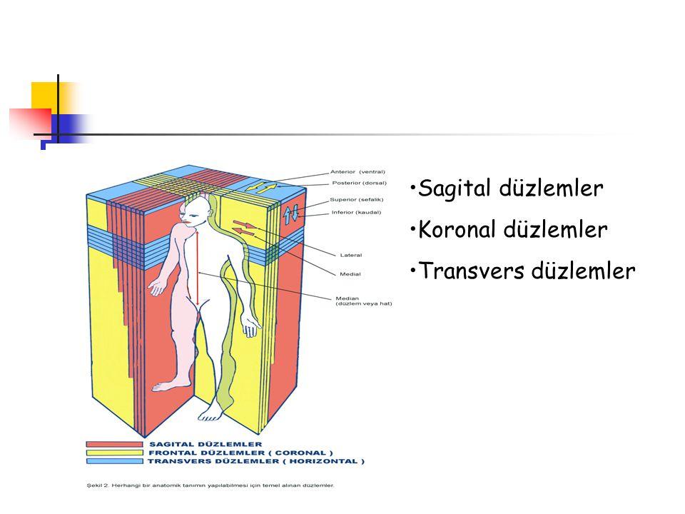 Sagital düzlemler Koronal düzlemler Transvers düzlemler