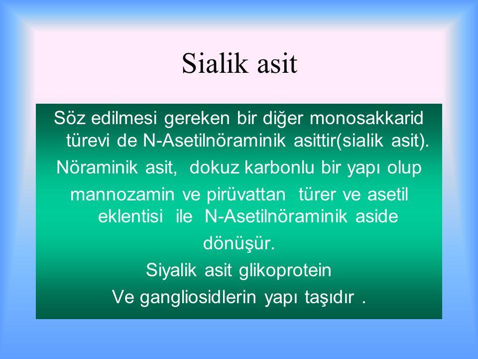 Sialik asit Söz edilmesi gereken bir diğer monosakkarid türevi de N-Asetilnöraminik asittir(sialik asit).