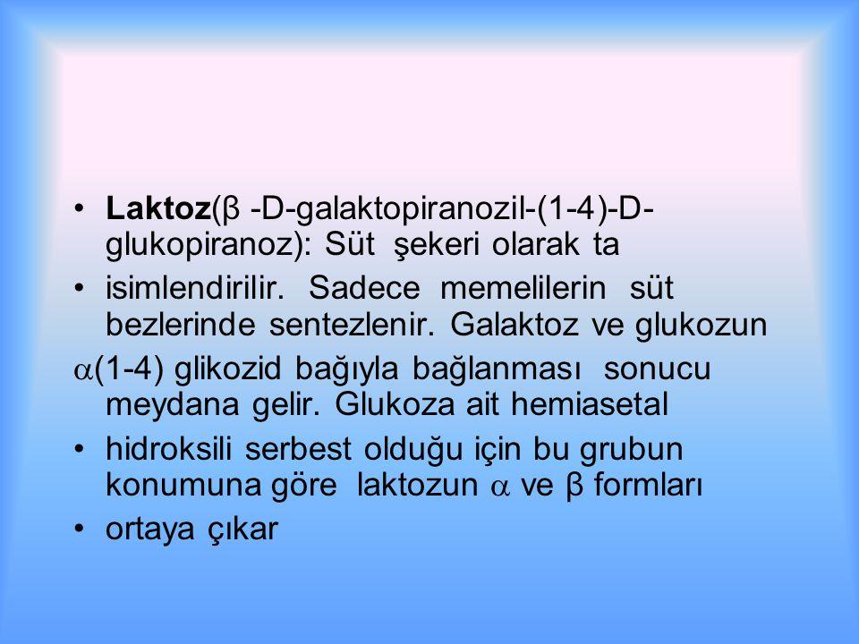 Laktoz(β -D-galaktopiranozil-(1-4)-D-glukopiranoz): Süt şekeri olarak ta