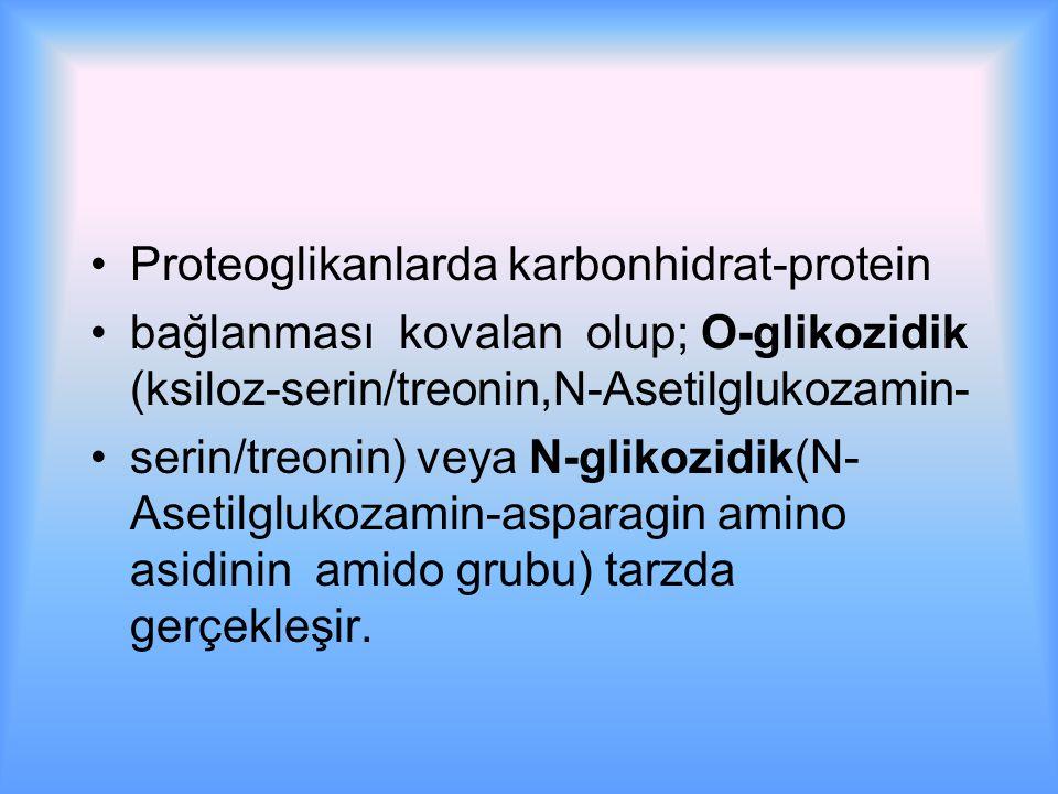 Proteoglikanlarda karbonhidrat-protein