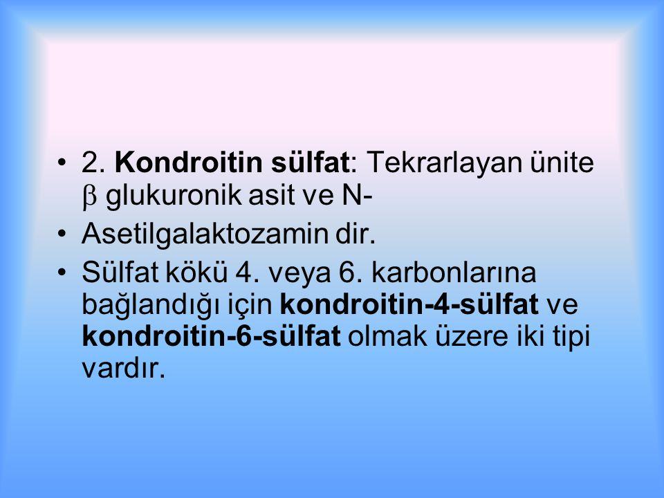 2. Kondroitin sülfat: Tekrarlayan ünite  glukuronik asit ve N-