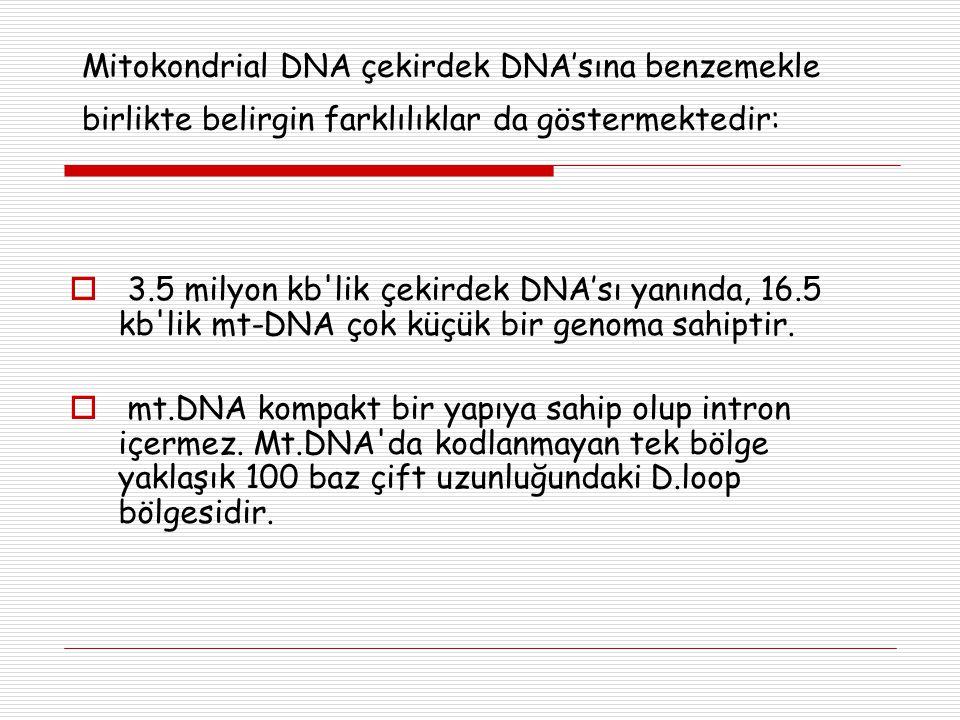 Mitokondrial DNA çekirdek DNA'sına benzemekle birlikte belirgin farklılıklar da göstermektedir: