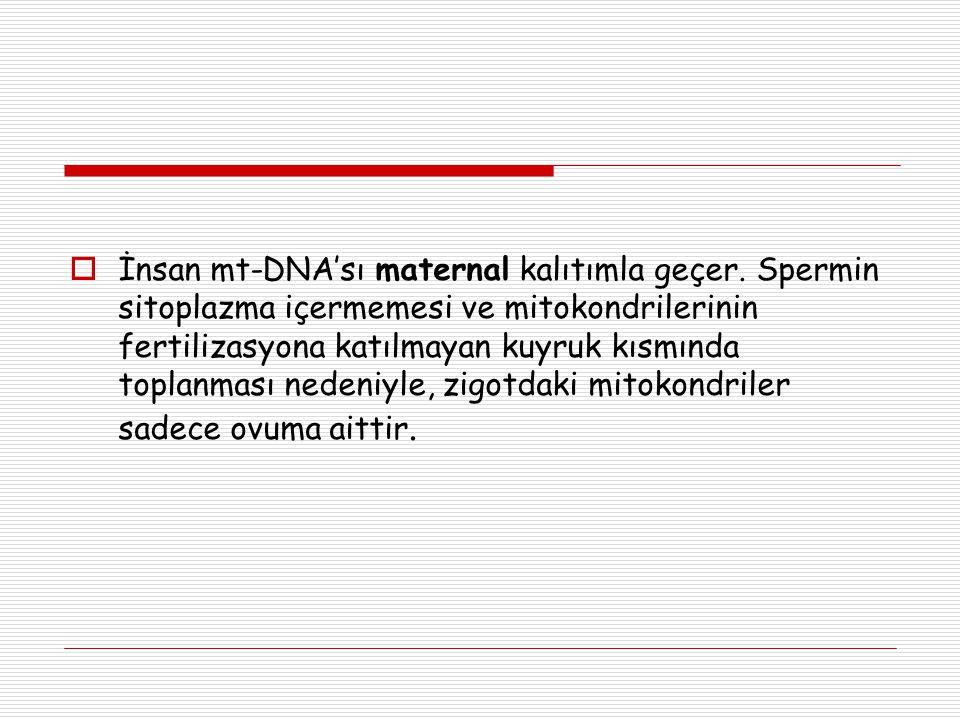 İnsan mt-DNA'sı maternal kalıtımla geçer