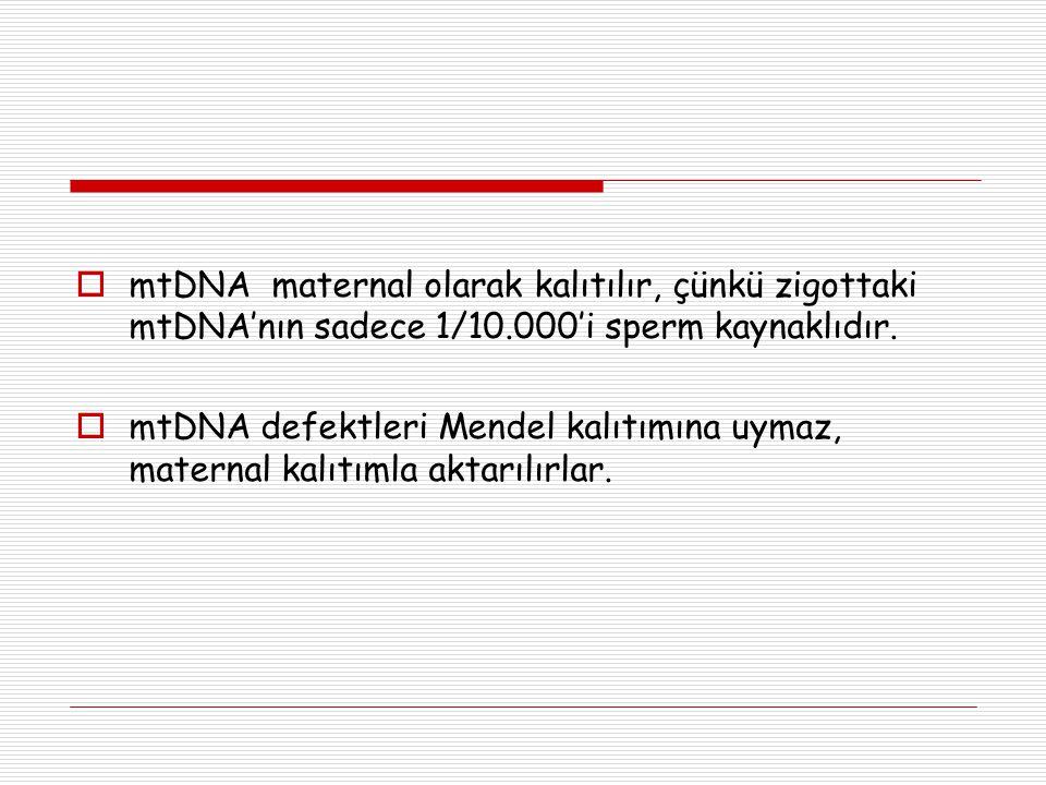 mtDNA maternal olarak kalıtılır, çünkü zigottaki mtDNA'nın sadece 1/10
