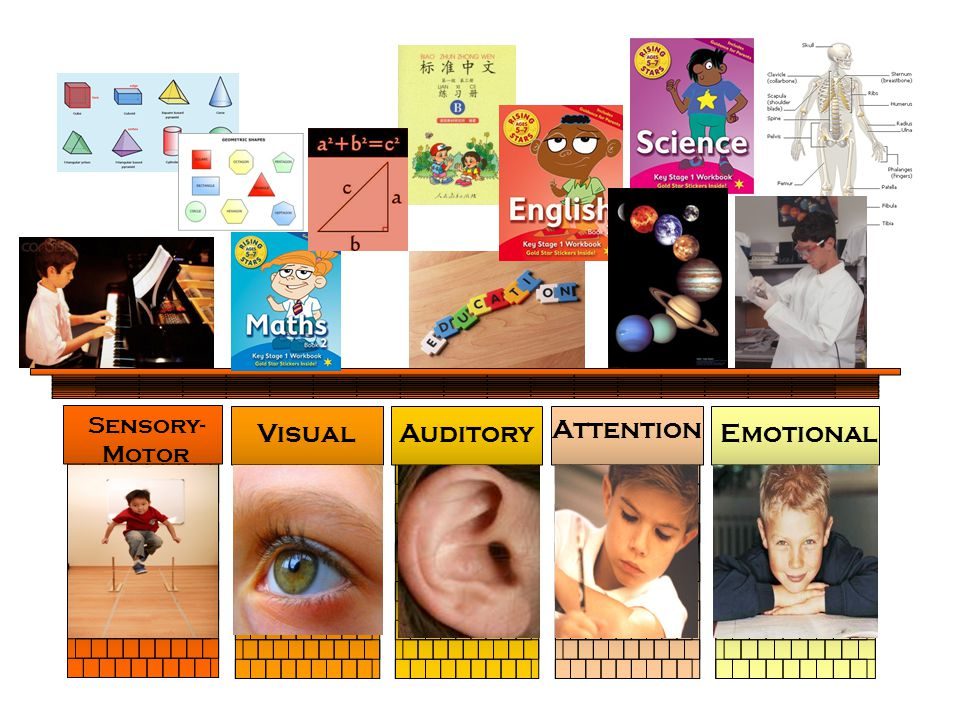 Sensory-Motor Visual Auditory Attention Emotional
