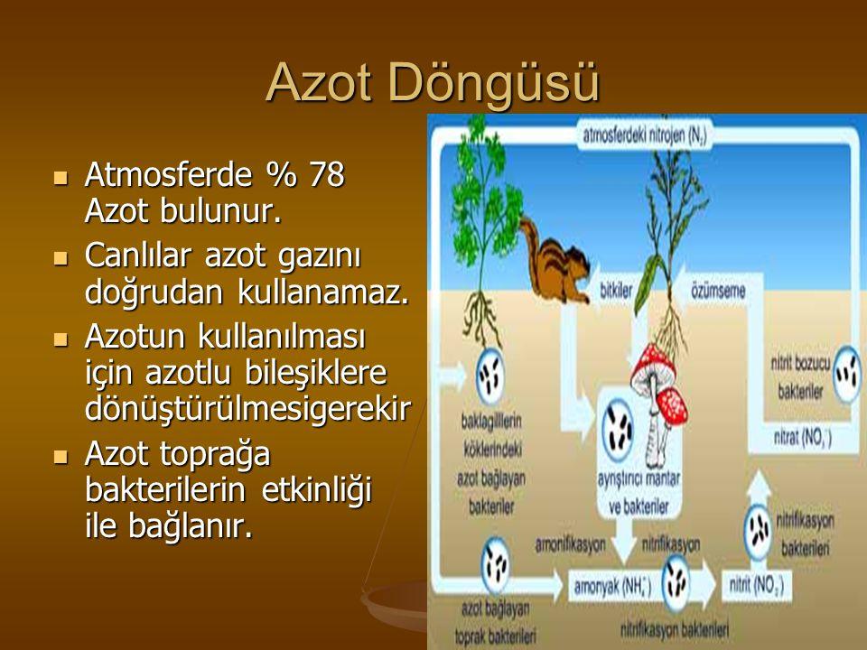 Azot Döngüsü Atmosferde % 78 Azot bulunur.